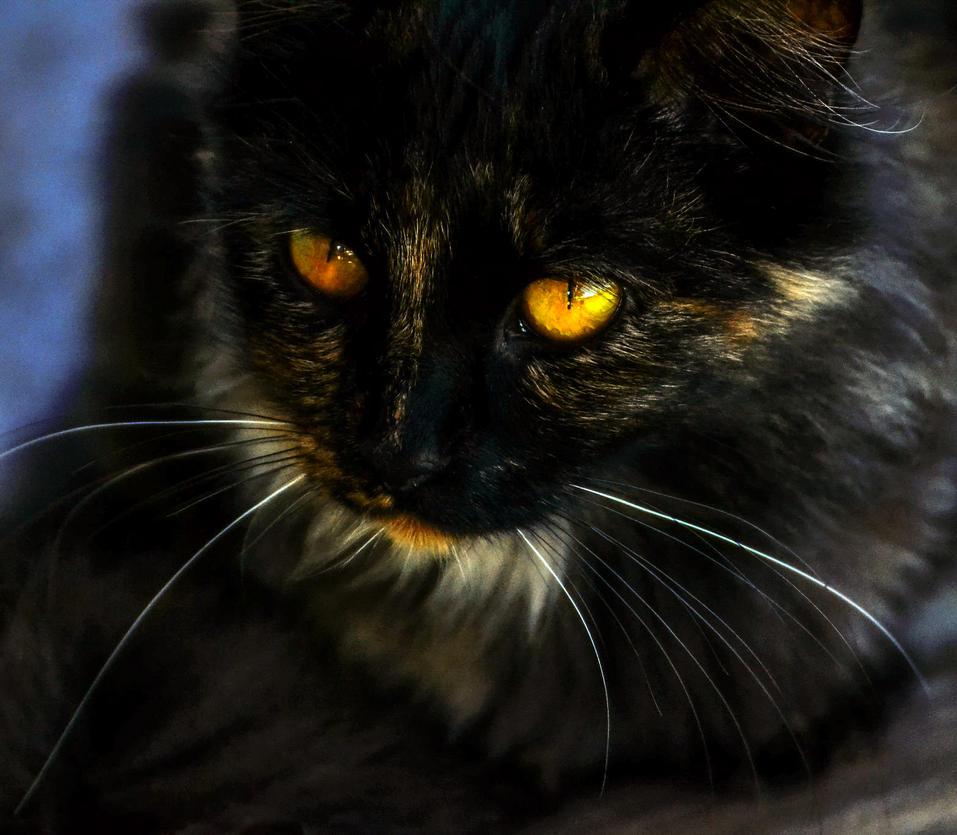 Meow by BushyBashai