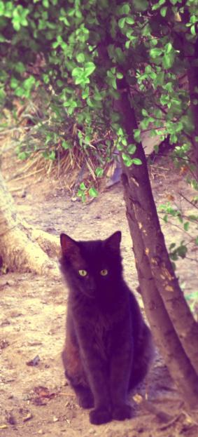 Gato negro by alesdf