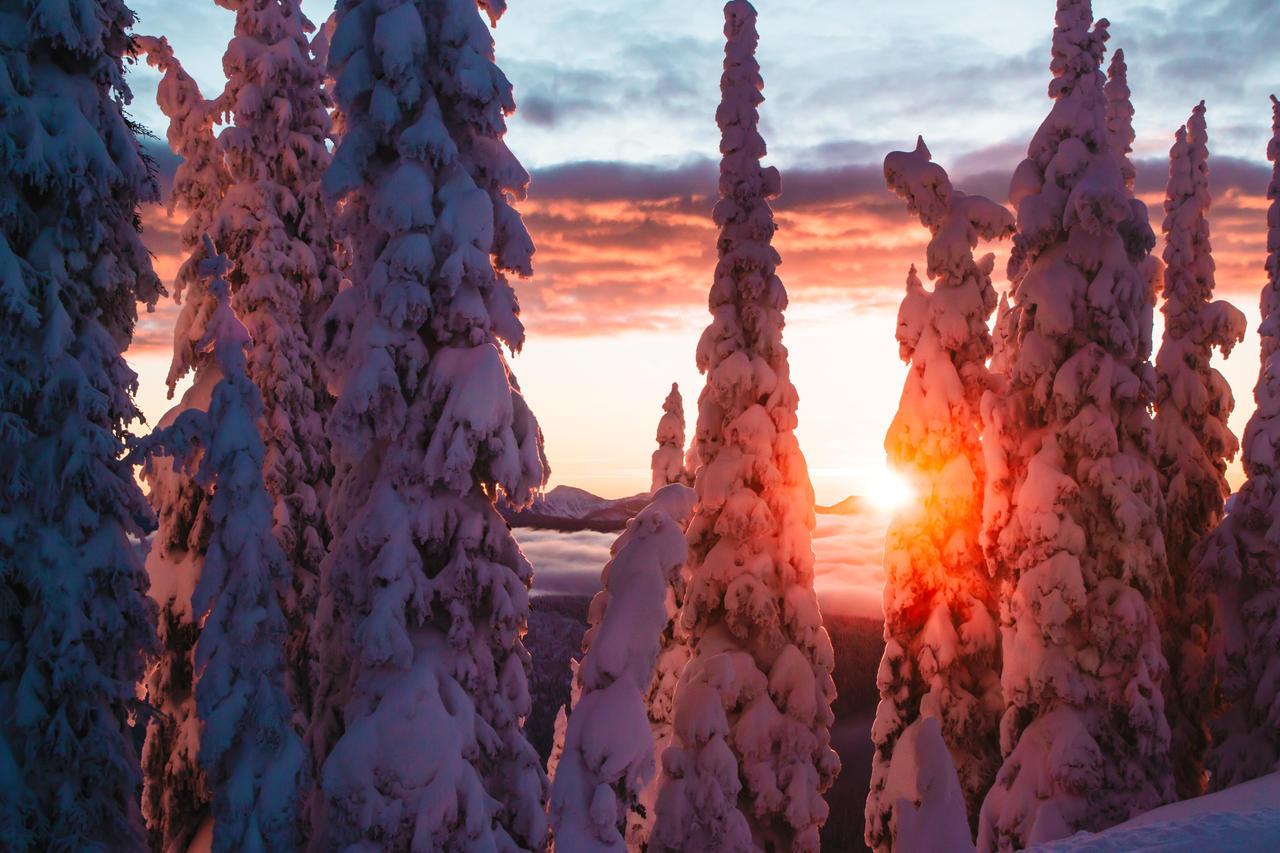Mushi Sunrise by toblet