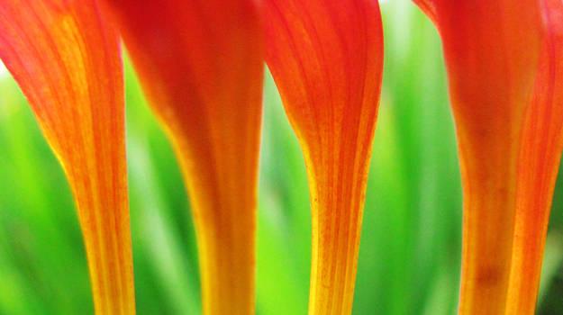 Flower trumpets
