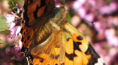 Butterflyby