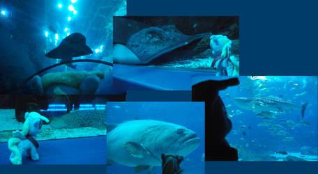 A day in Georgia, Part Two: Aquarium- Ocean Voyage