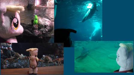 A Day in Georgia, Part Two: Aquarium
