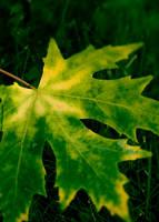 Green + Yellow by DeniseSoden