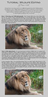 Tutorial: Wildlife Editing