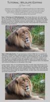 Tutorial: Wildlife Editing by DeniseSoden