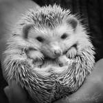Ridiculous Cuteness by DeniseSoden