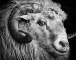 Sergei the Ram