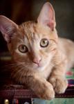 Oh Kitten, My Kitten