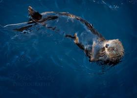 Otter Glide by DeniseSoden