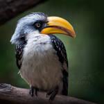 Hornbill Squared