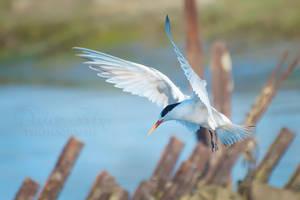 The Landing by DeniseSoden
