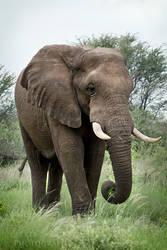 Makgadikgadi Elephant 030 by DeniseSoden