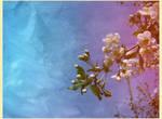 Springtime IX
