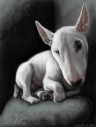 Ghost Bull Terrier by SadieMae
