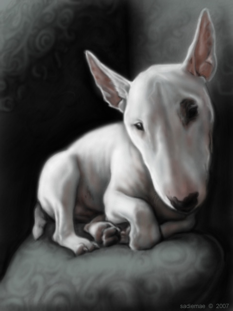 Ghost Bull Terrier By SadieMae On DeviantArt - Bull terrier art