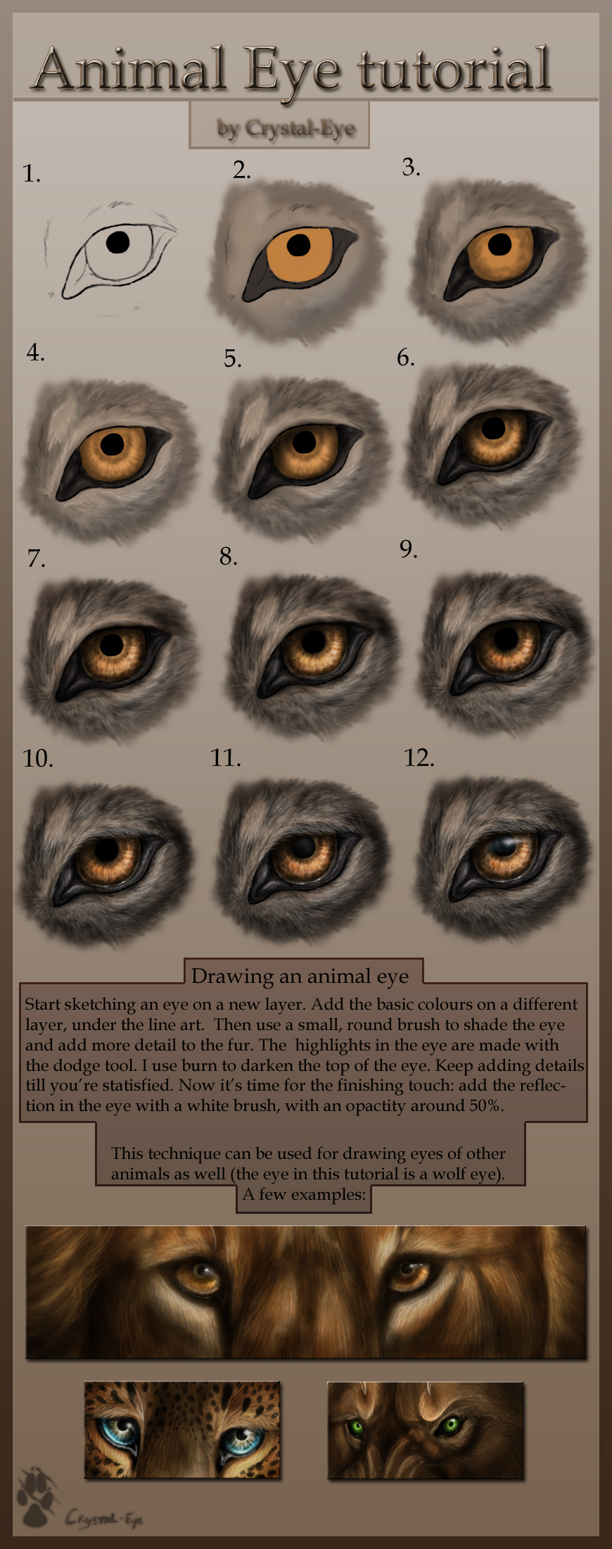 http://fc09.deviantart.net/fs37/f/2008/250/6/9/Animal_Eye_tutorial_by_Crystal_Eye.jpg