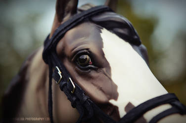 See the world in horse's eye by Frisullka1