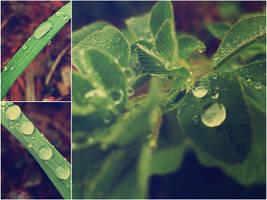 Plants by KenielOdoms