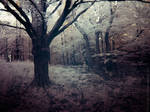 Pictorialist Infrared Shaded Forest