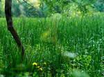 High Grass Wetlands