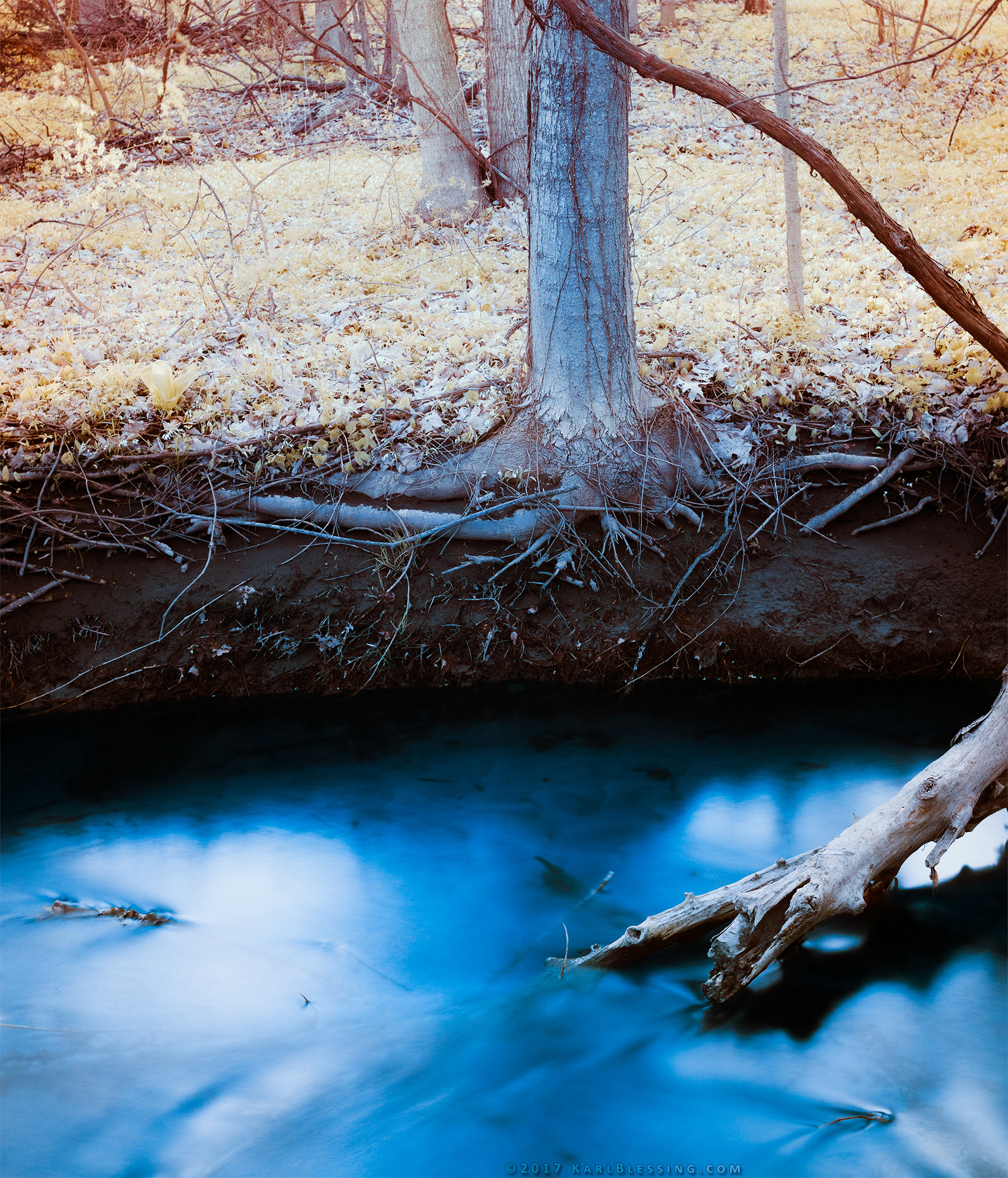 Rooted in a Creek