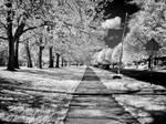 Along John Ball Park (930nm IR)
