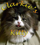 Clarkie's Kitty