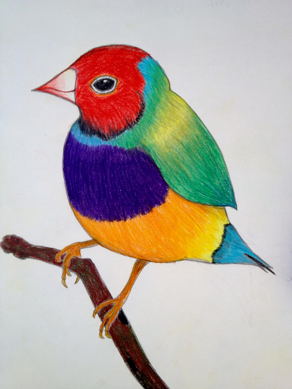 Colorful Bird Images C...