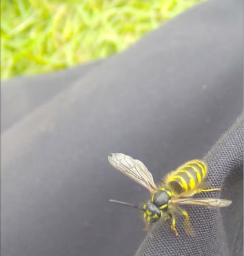Wasp! by KayleighOC