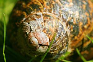 Grumpy Snail