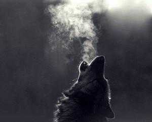 WolfheartofStormclan's Profile Picture