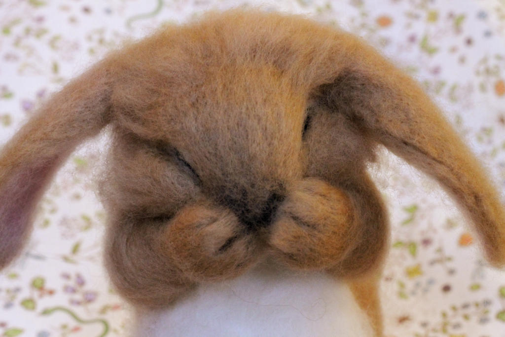 Baby lop eared rabbit - photo#27