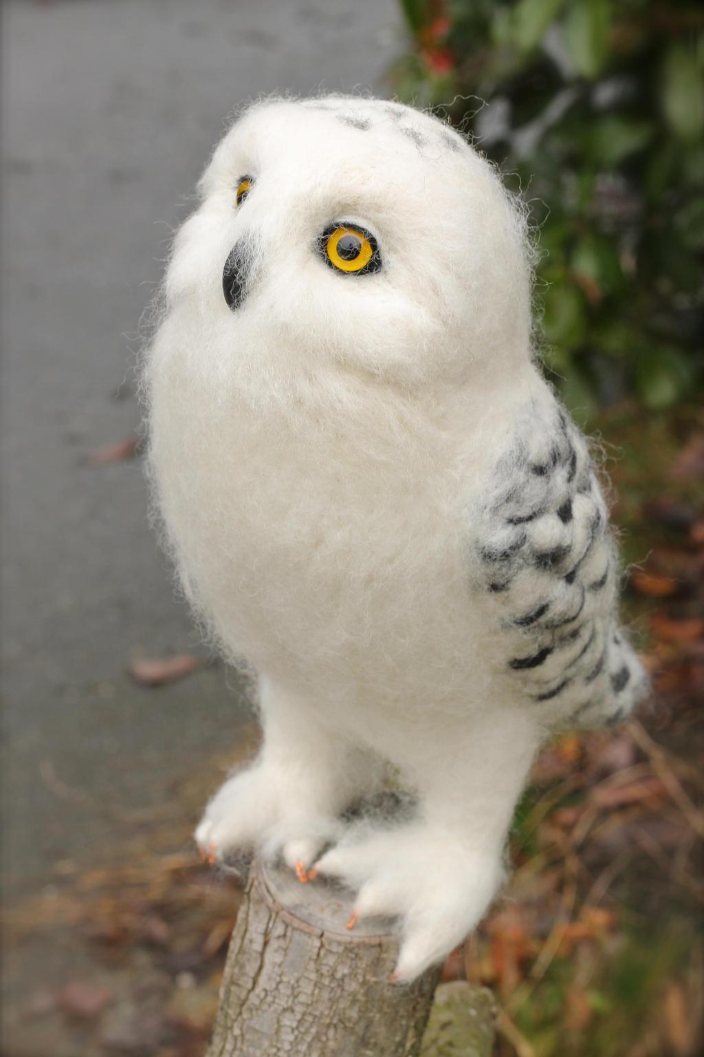 Cute baby white owl - photo#31