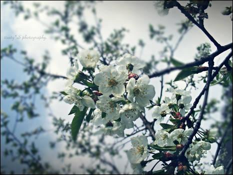 Spring ._.