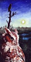 Owly Friend