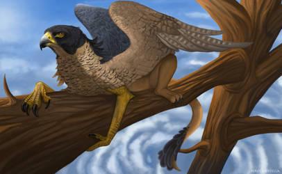 Peregrine Falcon Griffin