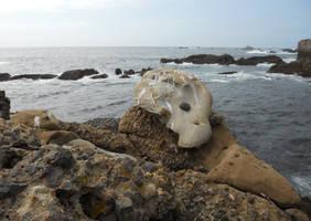 Bird Skull rock
