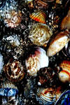 sea shells by giannisix