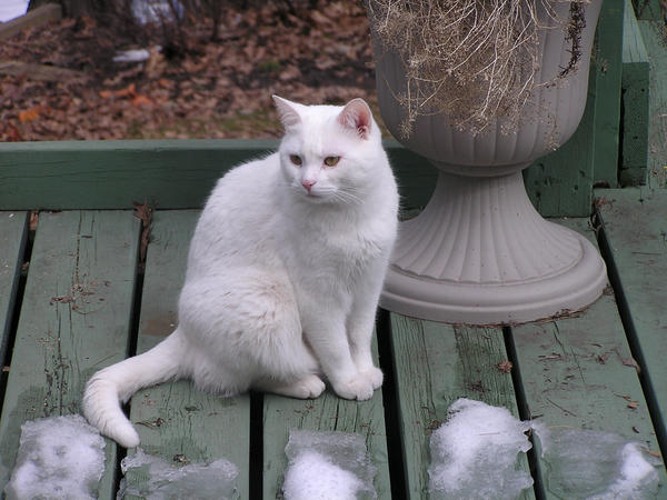 Cat Looking 3 by loopyker-stock