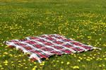Picnic Blanket in Field 3