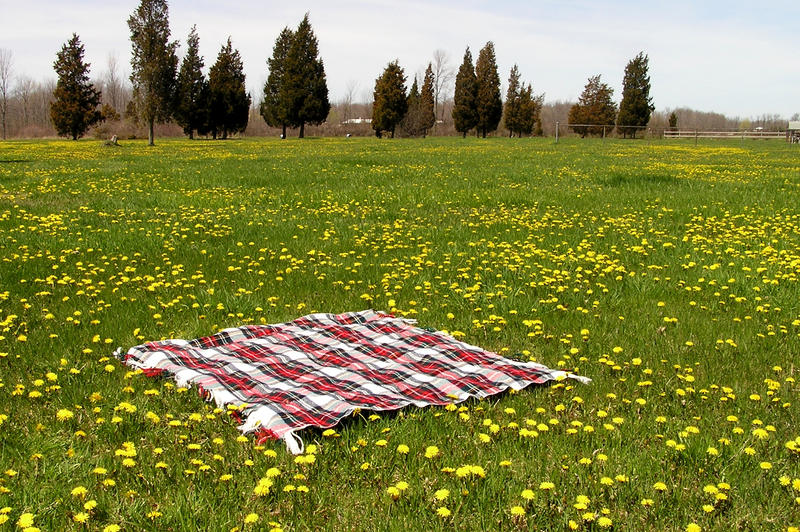 Blanket in Field Background 5