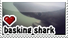 Basking Shark stamp by everyday-im-wumboing