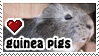 guinea pigs stamp v2 by everyday-im-wumboing
