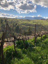 Vineyard in winter by Banananation77