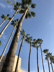 Palm trees in Jerusalem by Banananation77
