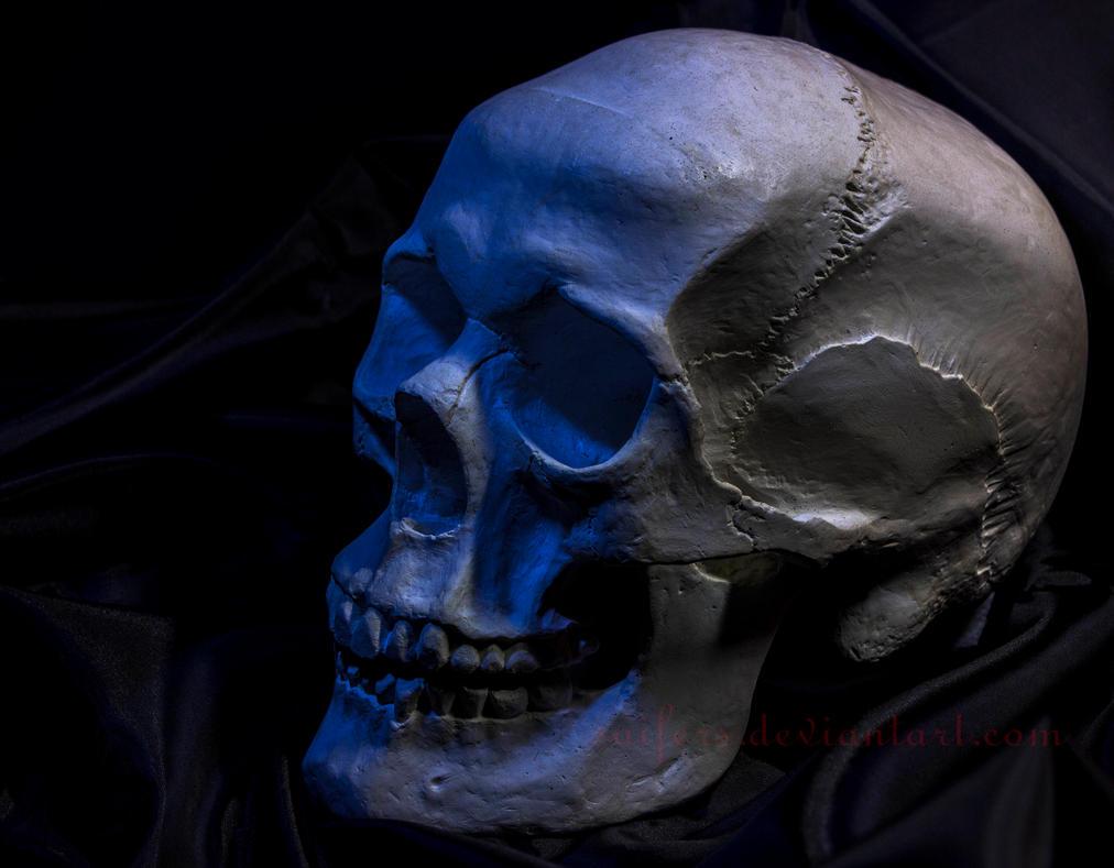 Skull 3 by Saifers