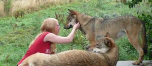 Meeting wolves by LabradoriteWolf