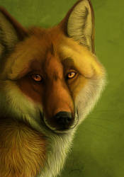Vixen by LabradoriteWolf