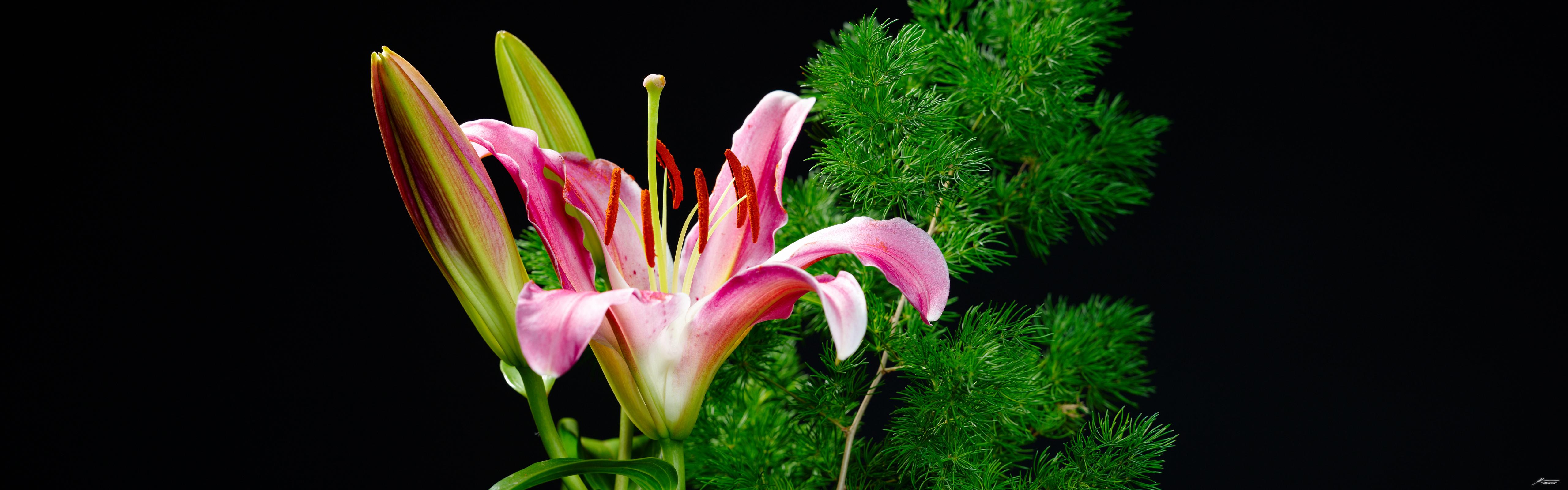 http://fc06.deviantart.net/fs38/f/2008/320/4/c/Orchid__Dual_Screen_by_MattLanham.jpg